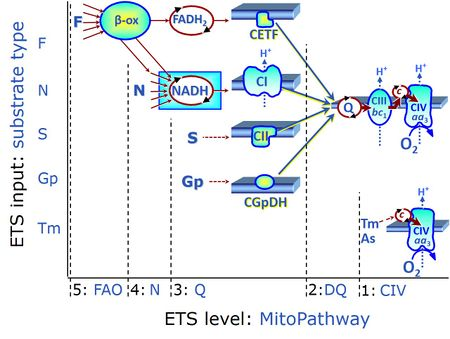 Multiple ET-pathways with FNSGpCIV