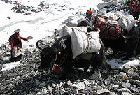 Everest base camp 2013